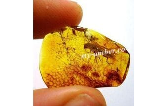 How to determine the authenticity of amber?