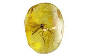 What is a Amber?